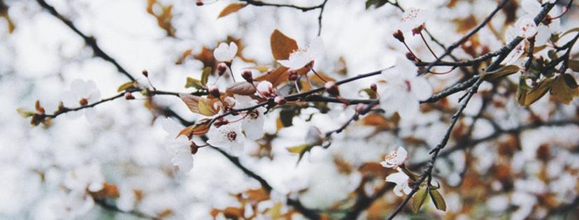 Einsame Spitze. Joan Didion